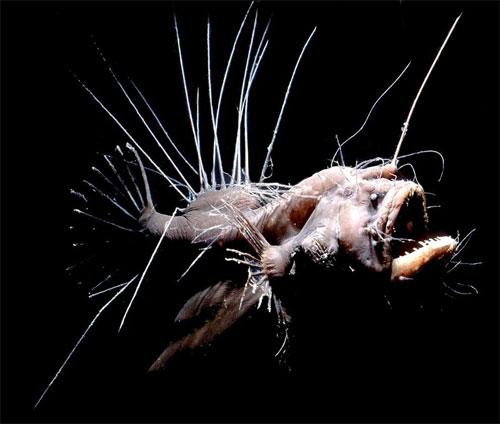 Омерзительная восьмёрка. Топ 8 самых уродливых животных в мире