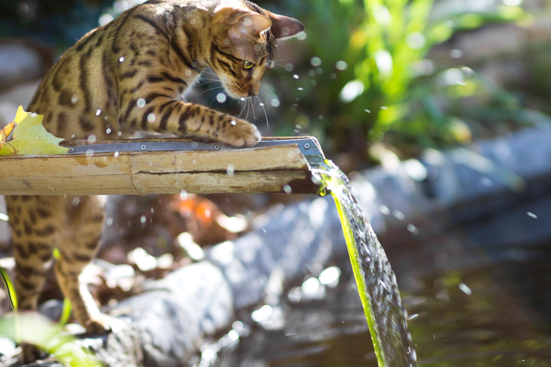 Вода и кошки картинки