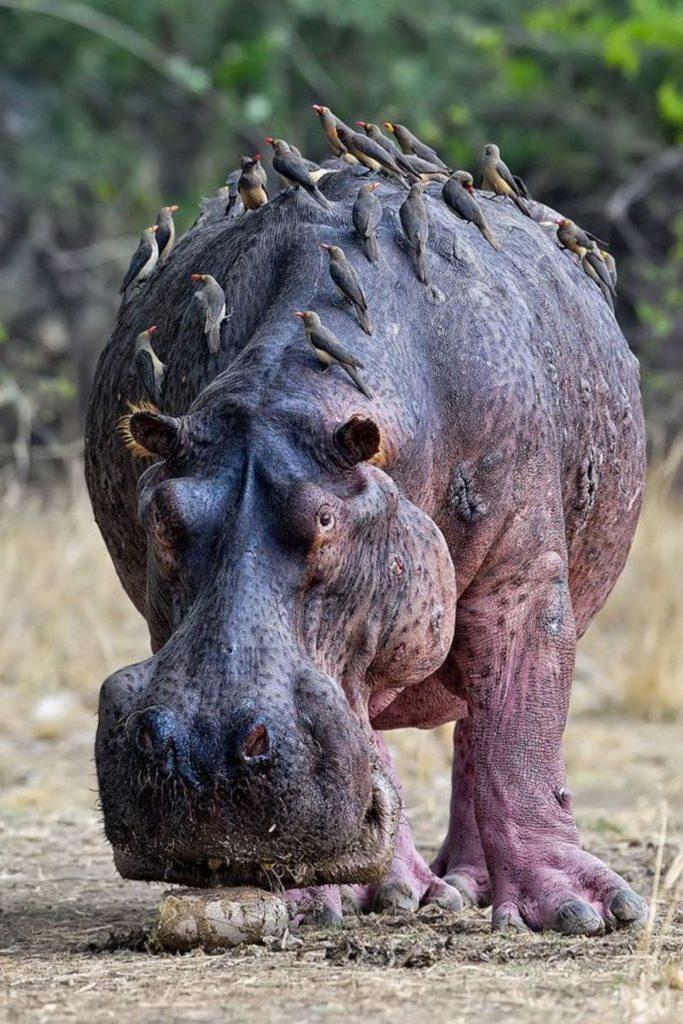 Топ 10 самых громких животных в мире