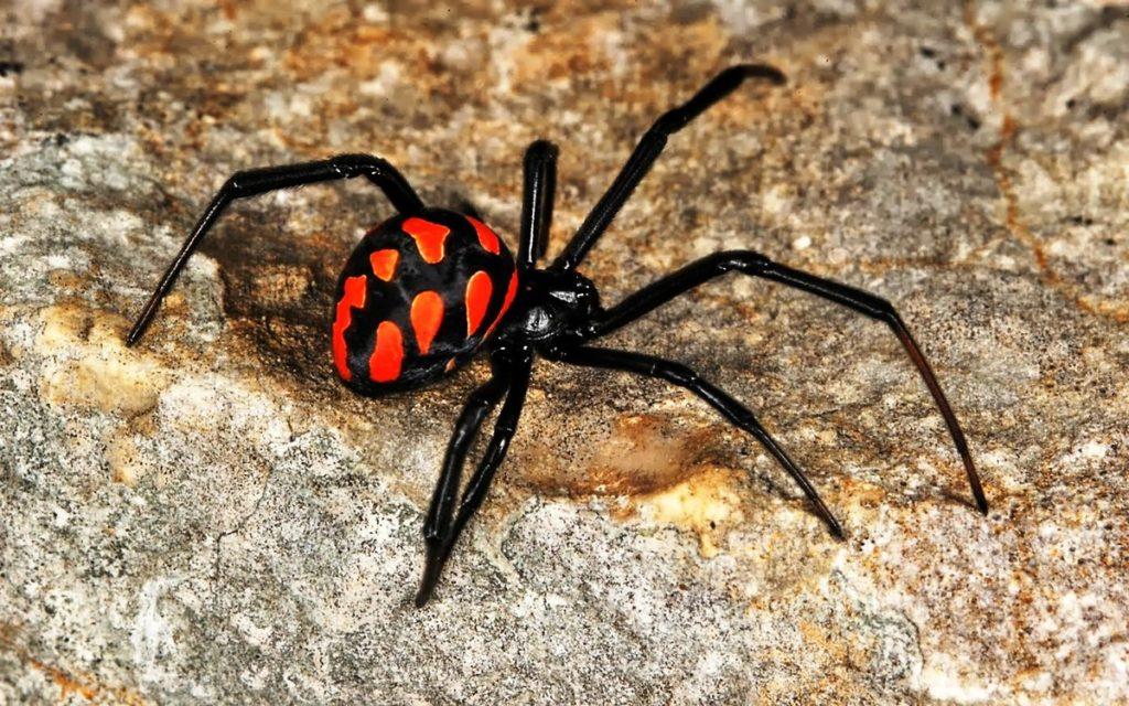 изданными в казахстане какие пауки водятся фото новый конкурс