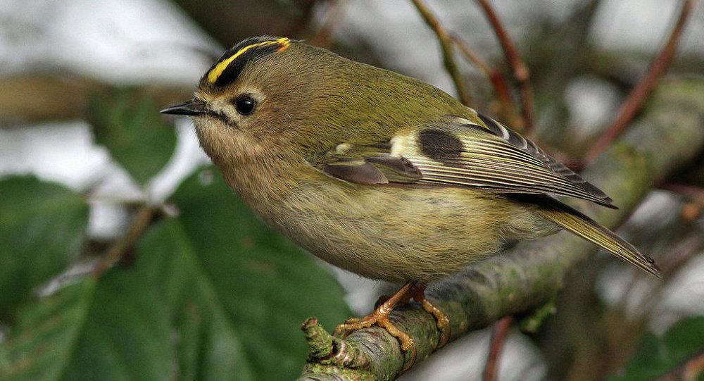 фото птиц обитающих в беларуси сказка