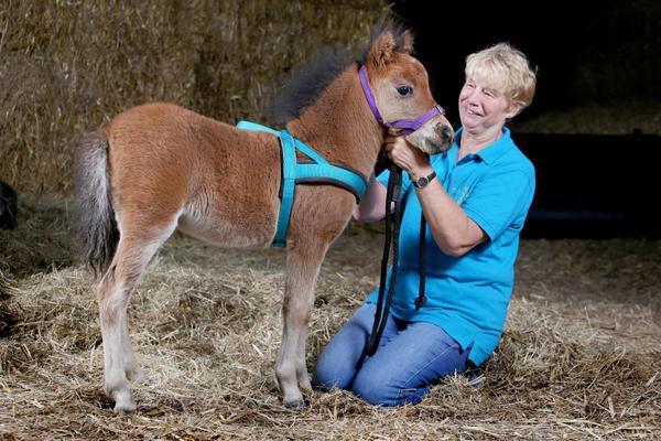 10 интересных и познавательных фактов о лошадях