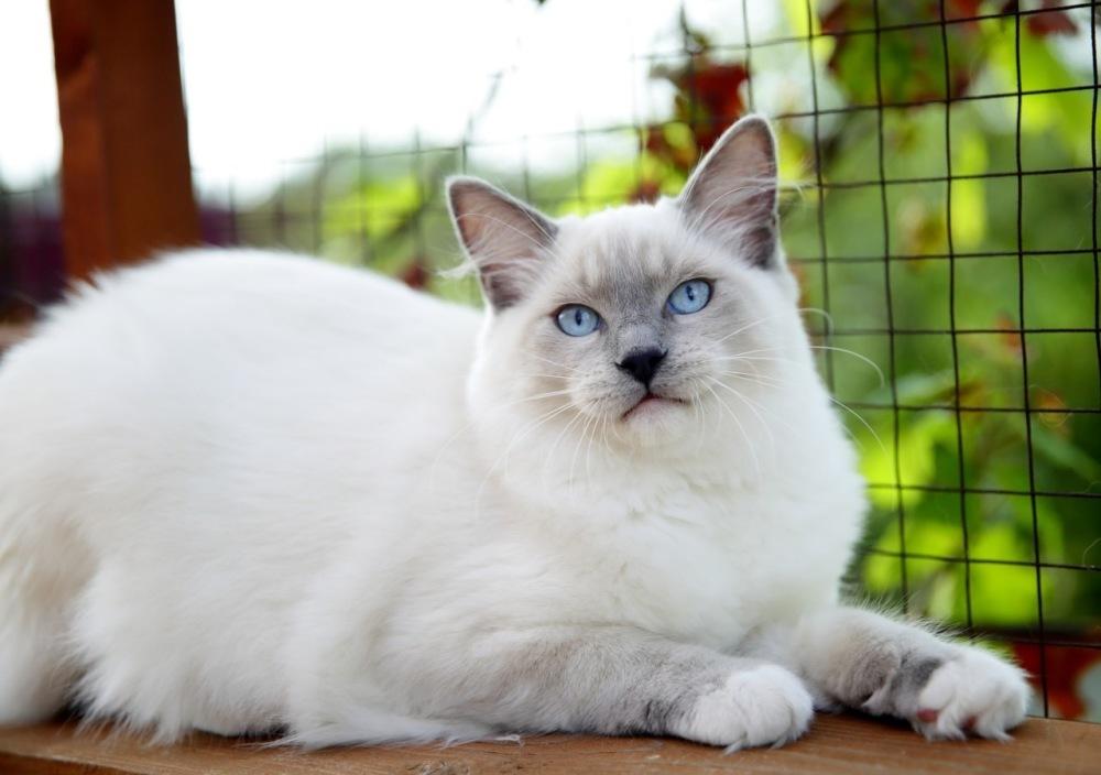 Самые красивые пород кошек в мире