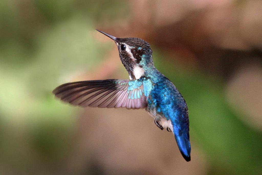 Топ 7 | Самые маленькие птицы в мире