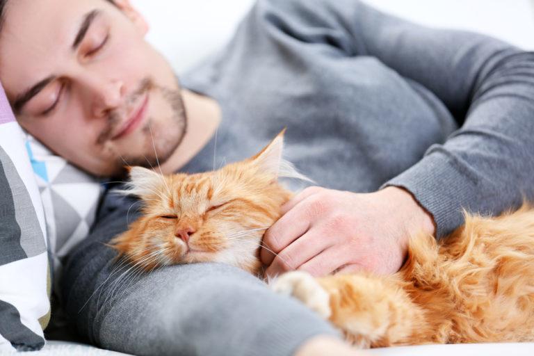 Почему коты мурлыкают? - Давайте разбираться