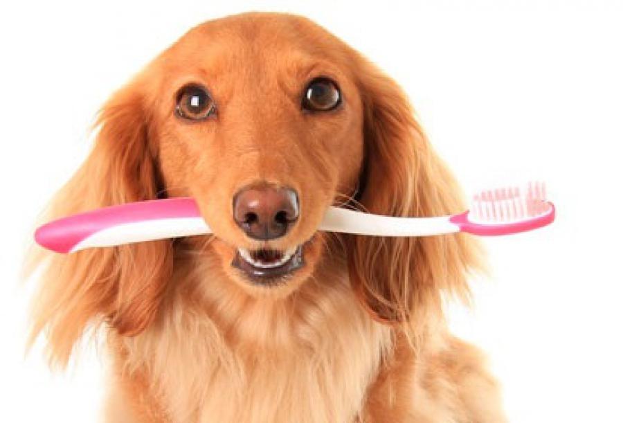 Как почистить зубы собаке [9 шагов]