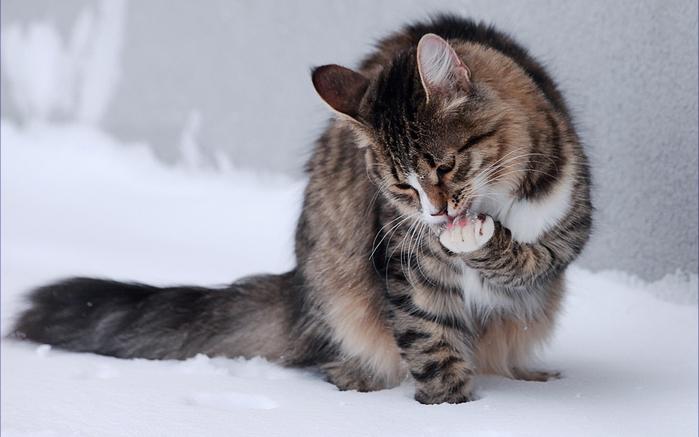 Как правильно определить погоду по кошке