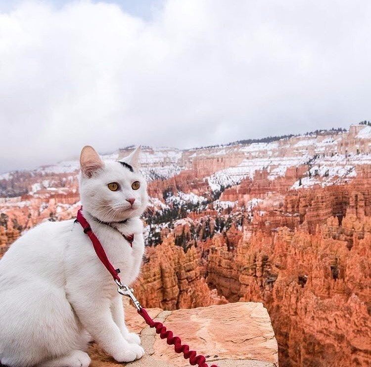 Как правильно путешествовать с кошкой [подготовка к поездке]