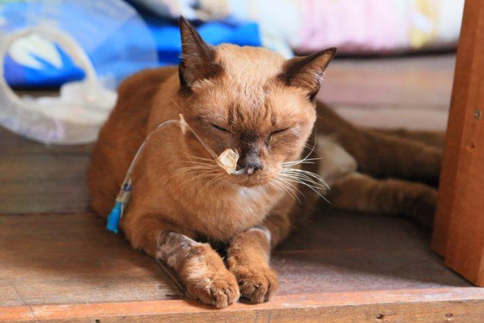 5 признаков скорой смерти кошки