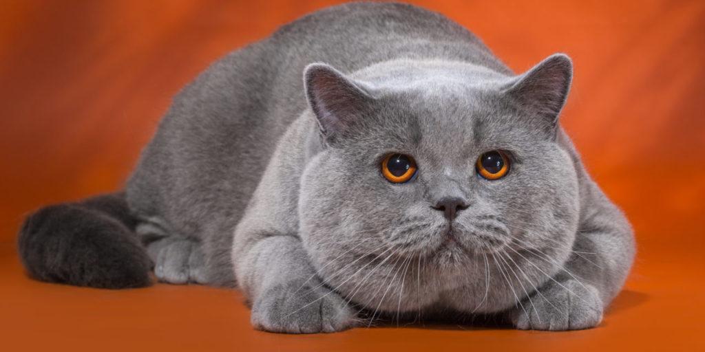 Как подобрать максимально подходящее имя для кошки?