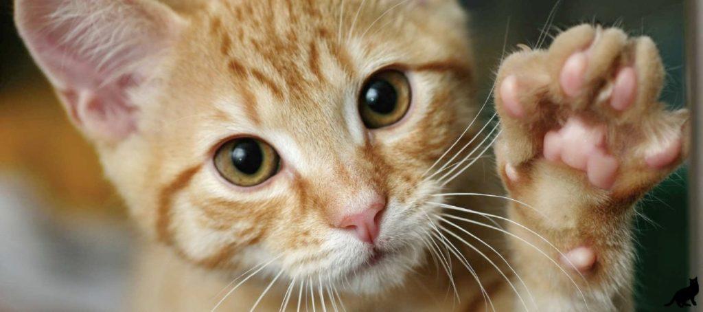 Зачем кошки топчут нас своими лапками?
