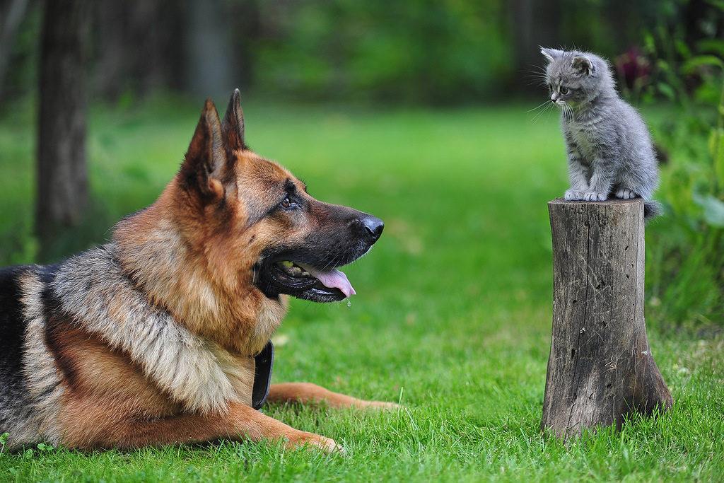Почему собаки кидаются на котов? Где кроется вражда?