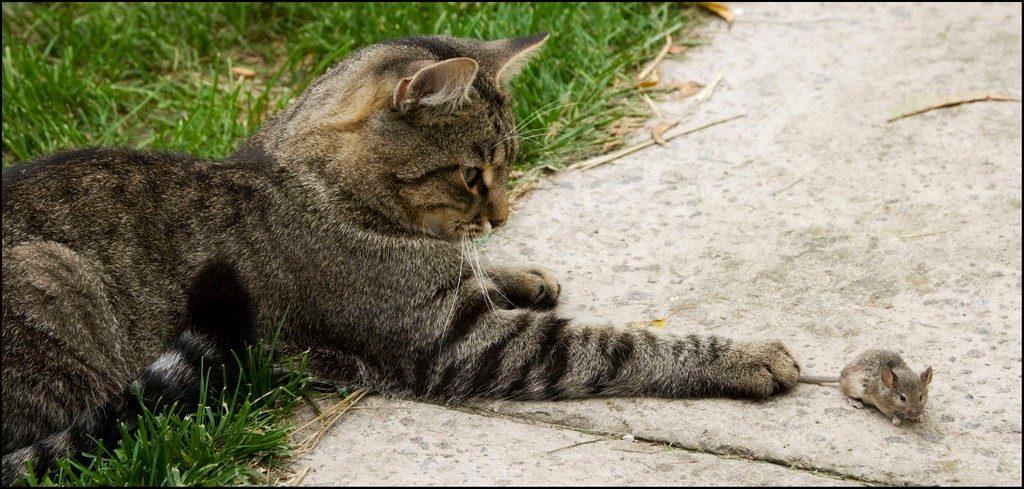 Почему беспородные кошки самые популярные домашние питомцы?