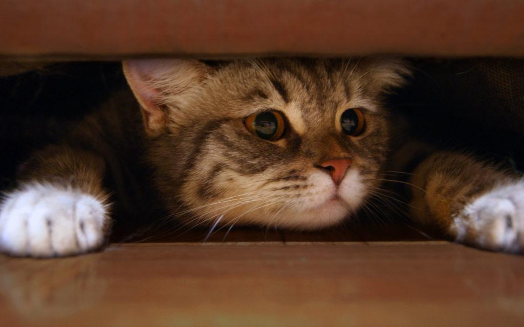 Как отучить котика будить вас по утрам?