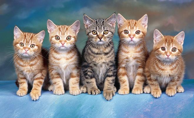 Как выбрать правильное имя для кошки