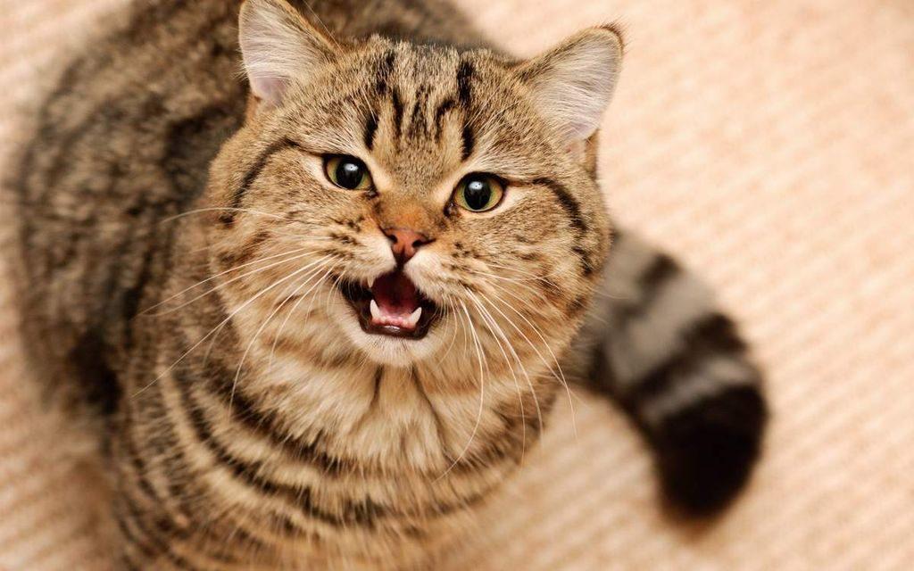 Как отучить кота от бурных утренних концертов?