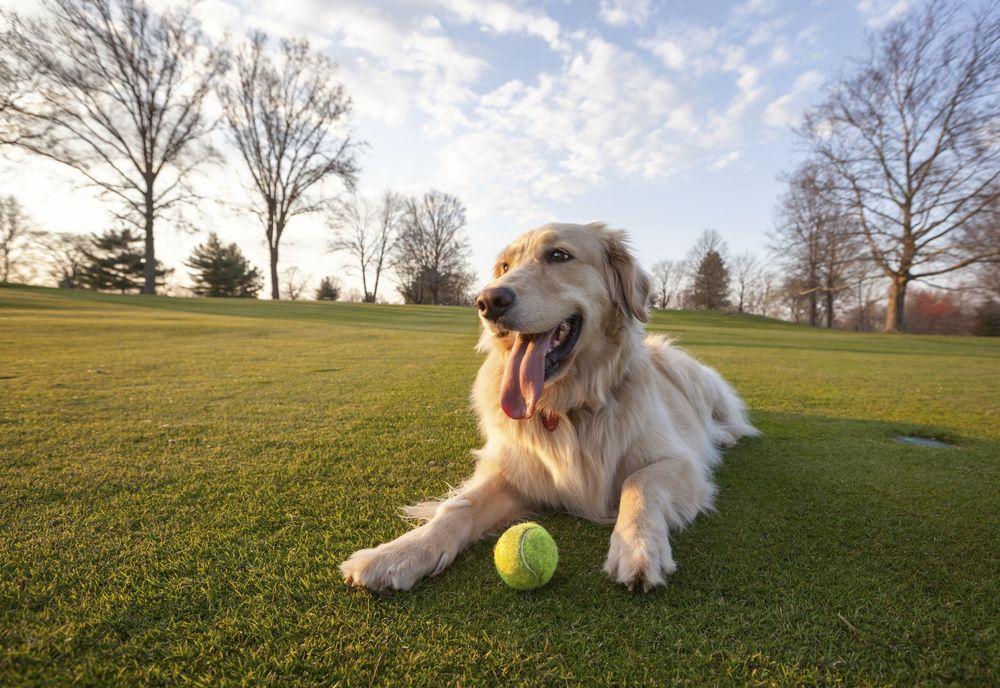 Топ 5 самых добрых собак в мире
