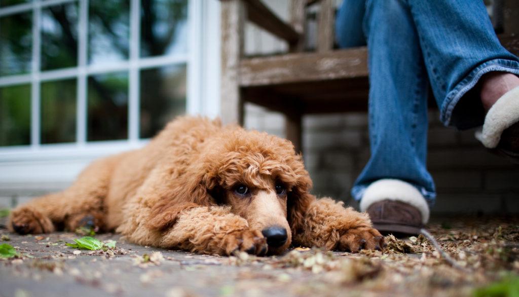 Топ 5 основных причин, почему собаки обижаются на людей