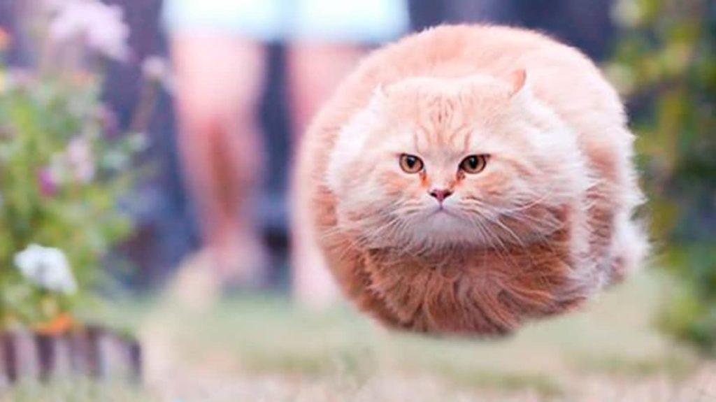 Откуда у кошки экстрасенсорные способности и так ли это?