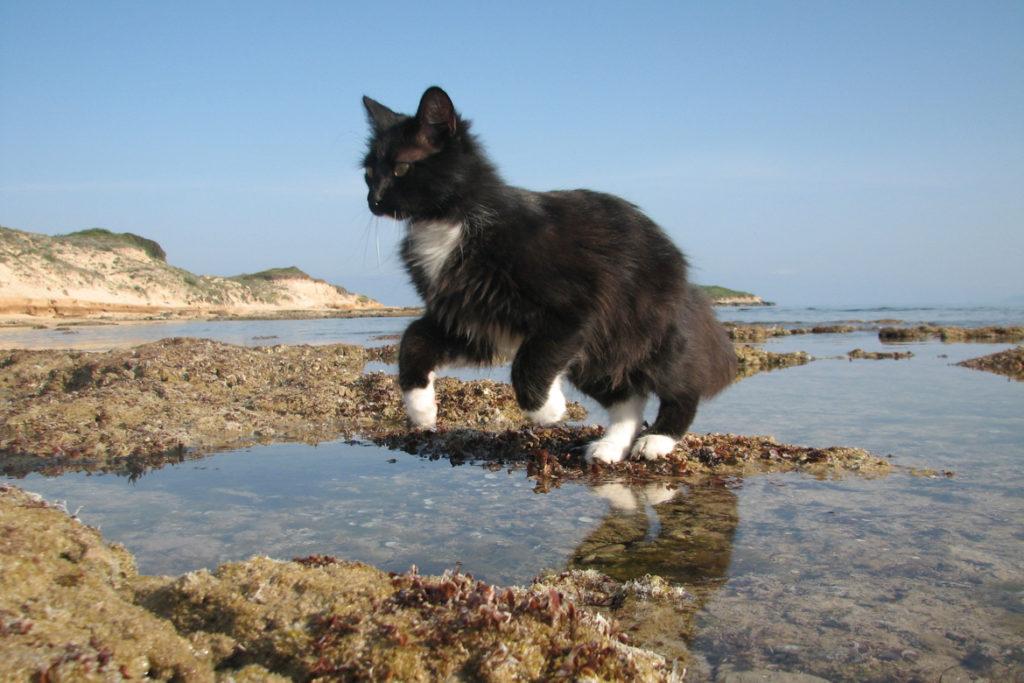 Остров кошек - Фраджост