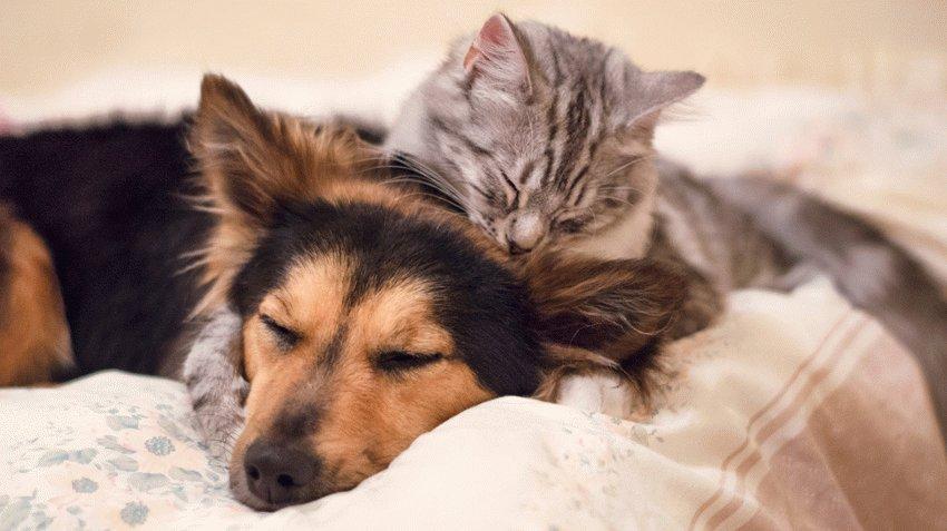 Кто лучше: собака или кошка [какого питомца лучше завести]