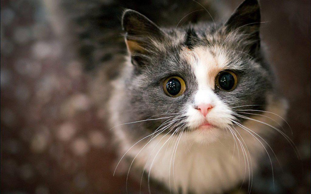 Что не любят кошки?