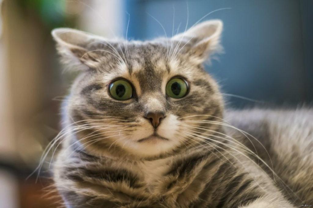 котенок удивлен фото