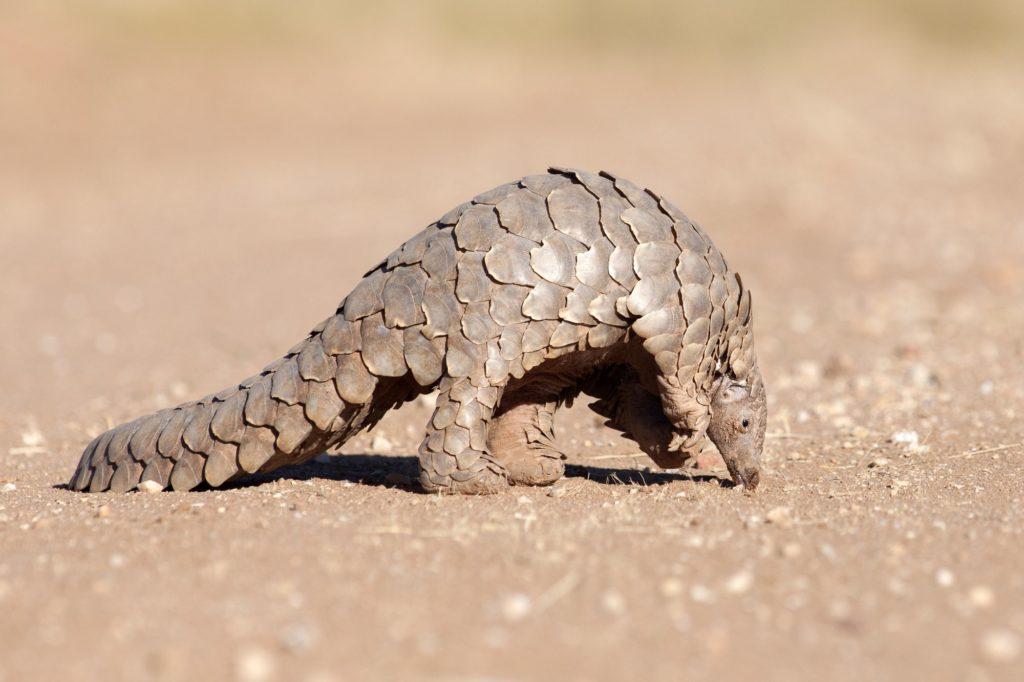 Странные и необычные представители животного мира