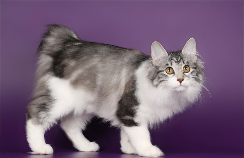 Какая кошка идеально подойдет вам по знаку зодиака?
