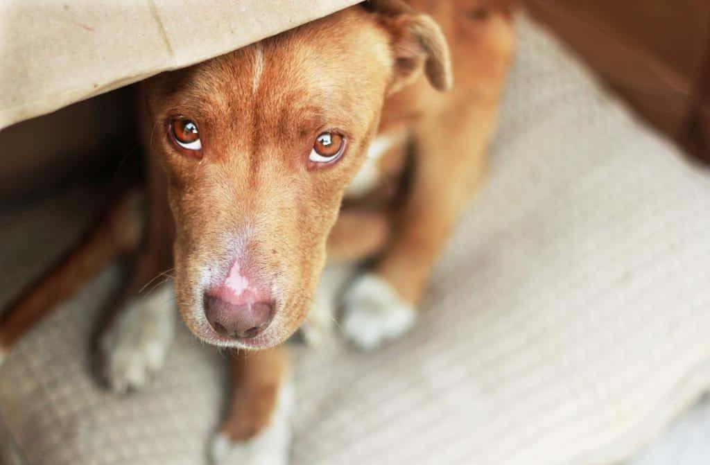Что делать, если Ваша собака - варвар или что может сделать собака в одиночестве