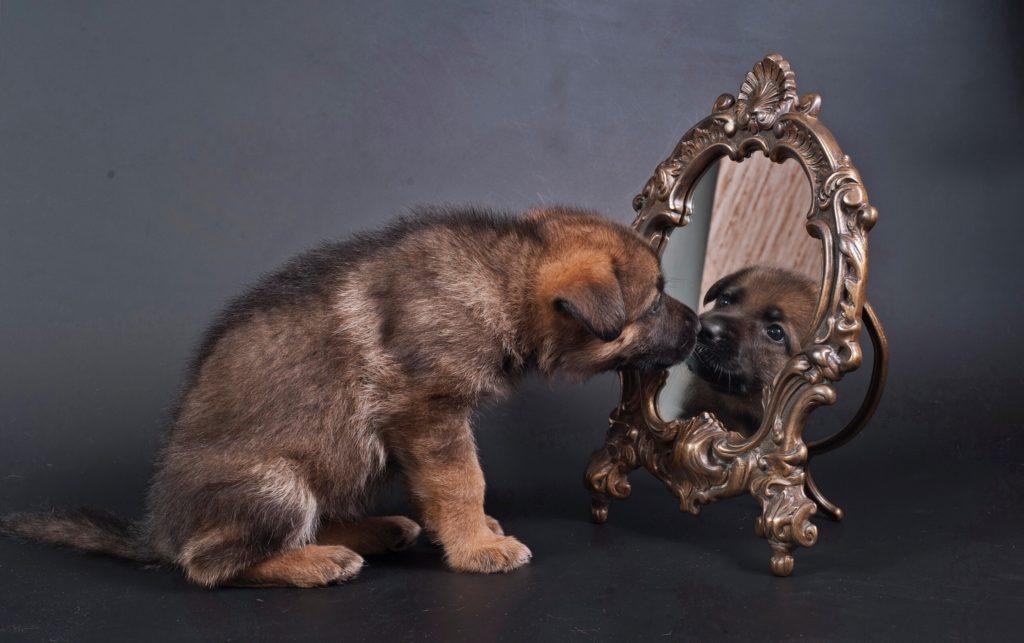 5 интересных и странных привычек у собак