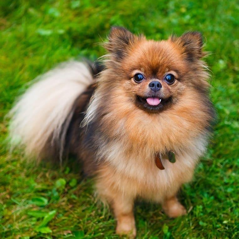 Как и когда появились маленькие породы собак
