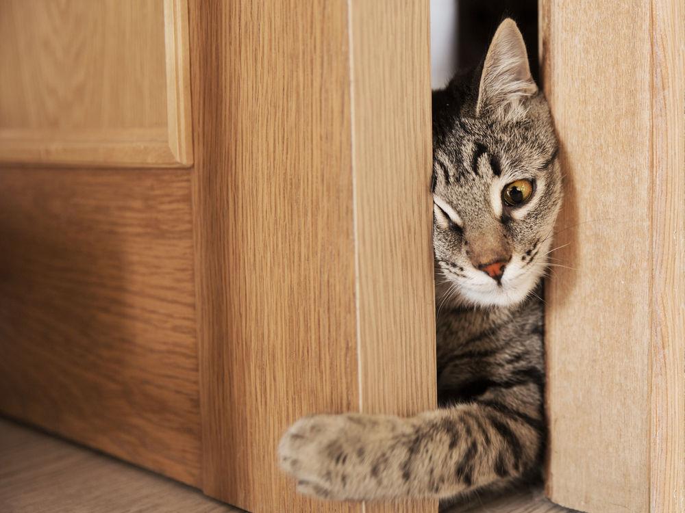 Почему кошка просит открыть дверь, но не заходит