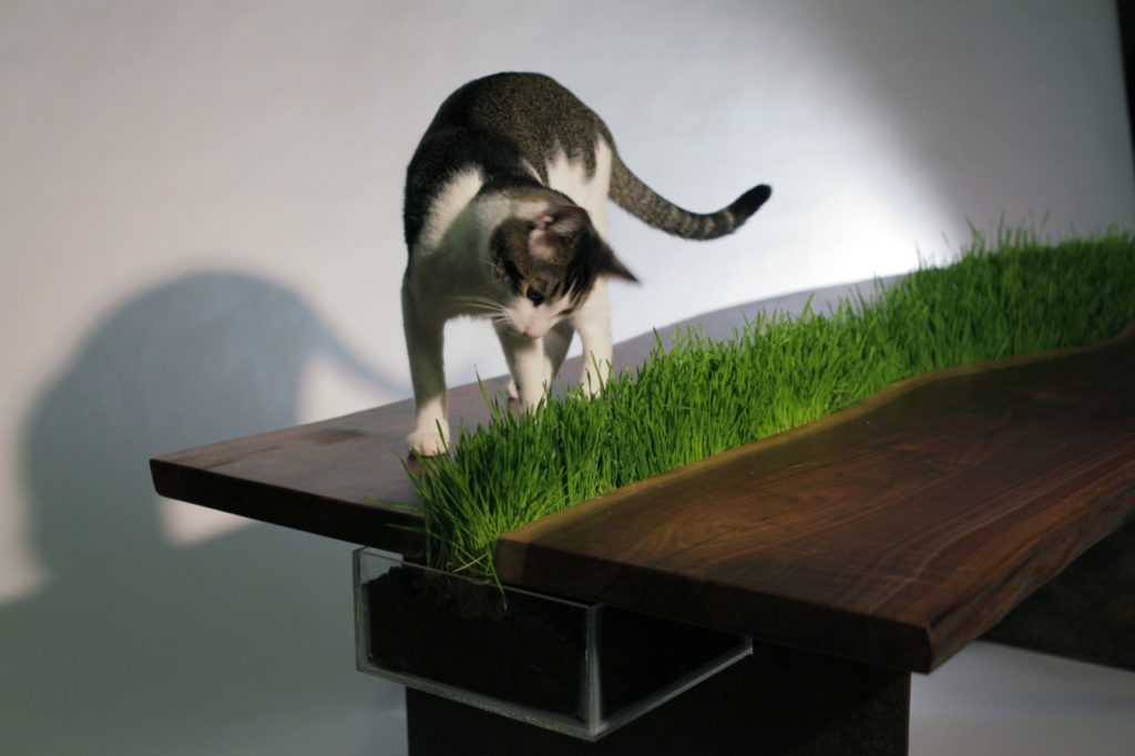 Почему ваша котя кушает комнатные цветы - разбираем подробно