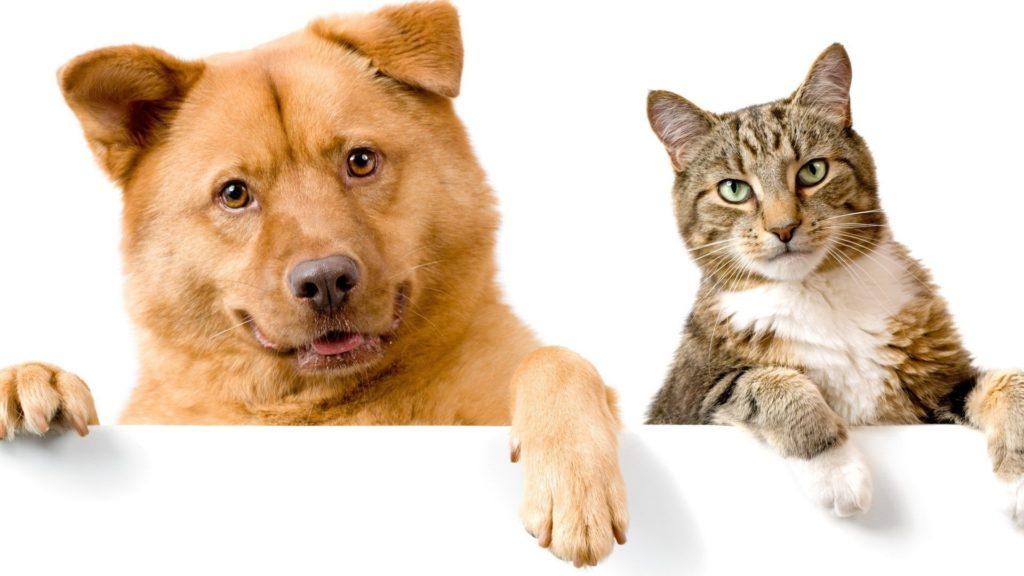 ТОП 5 фактов полезности домашних животных