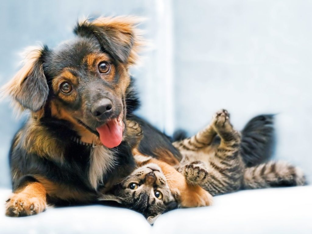 Кастрация домашних животных: взвешиваем все за или против?
