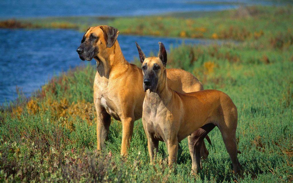 Топ 10 очень красивых пород собак