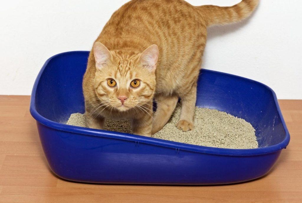 Десять причин, почему ваша котя не ходит в лоток