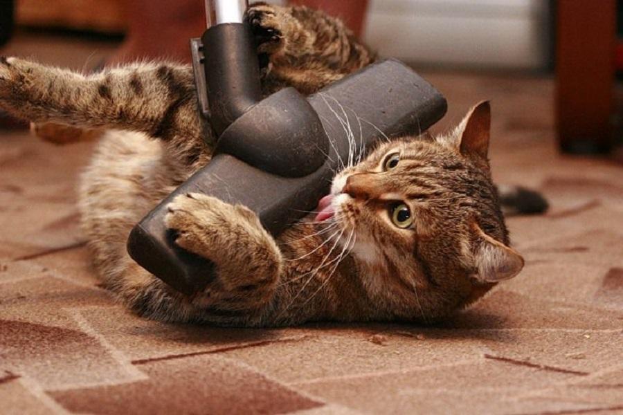 Почему кошки испытывают страх перед пылесосом?