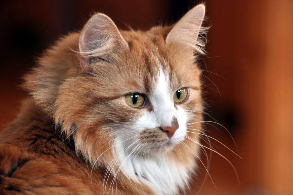 Топ 20 лучших интересных фактов о кошках