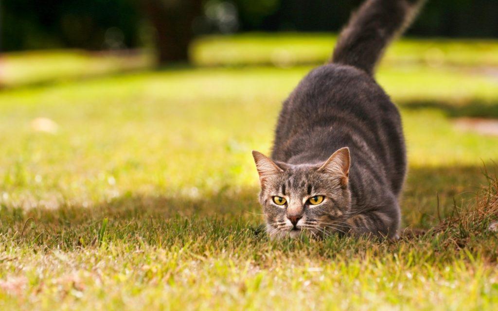 Почему ваша кошка постоянно голодная?