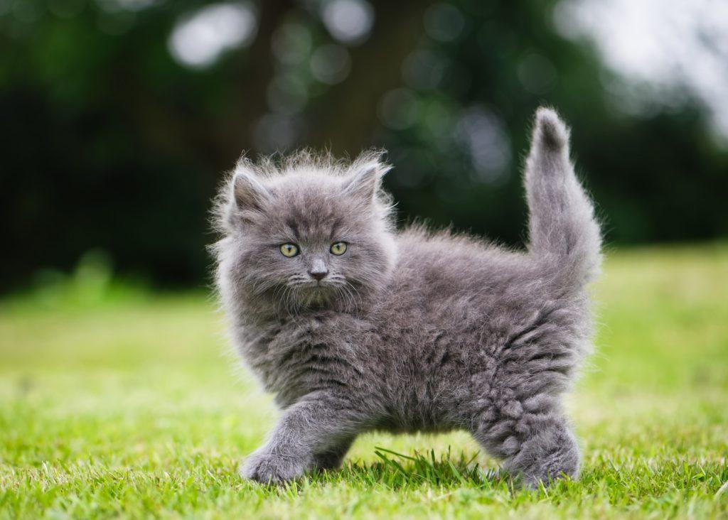 Почему коту нельзя мочить уши? Причины и основные правила ухода