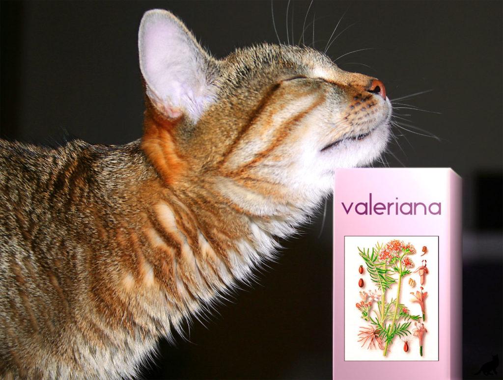 Что будет с кошкой, если ей дать валерьянку. Опасно ли это?