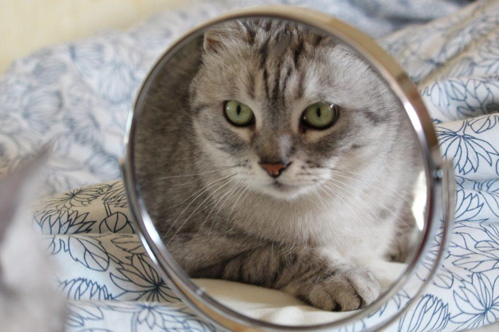 Способна ли кошка узнать себя в зеркале? Так ли это?