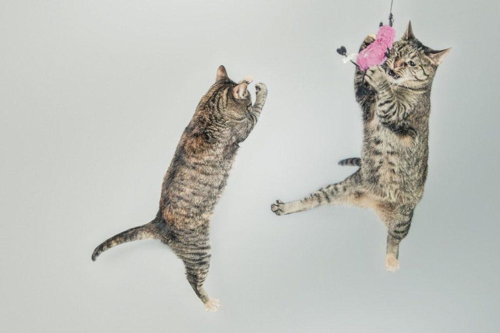 5 заблуждений о кошках, в которые вы раньше верили