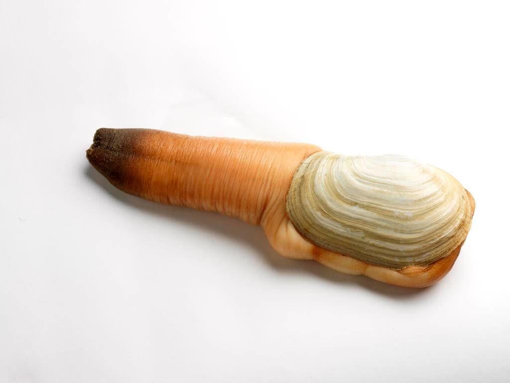 Гуидак - изысканный деликатес неприличного вида