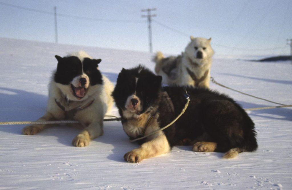 Какие домашние животные есть в Антарктиде