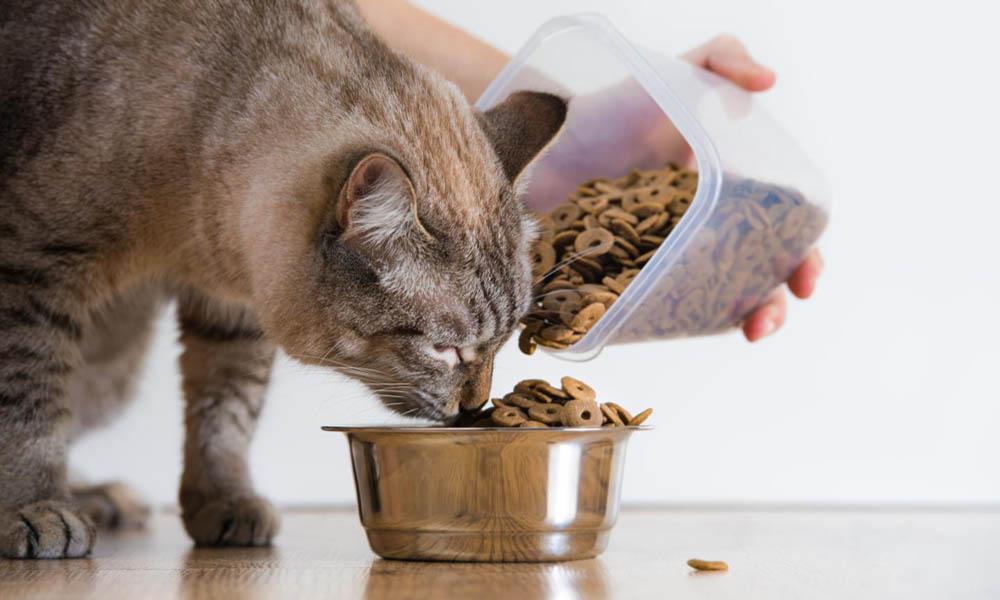 5 действенных способов посадить вашу котю на диету
