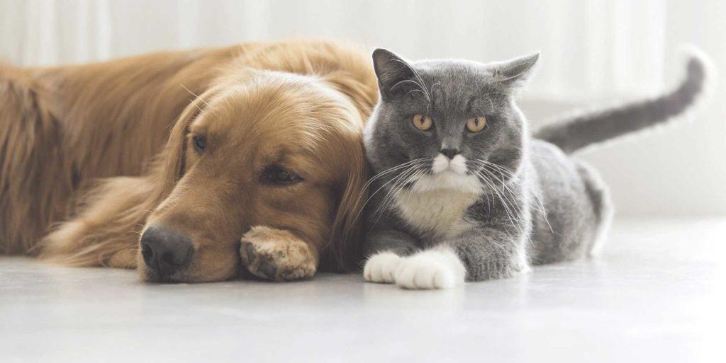 Какую опасность могут таить домашние животные?