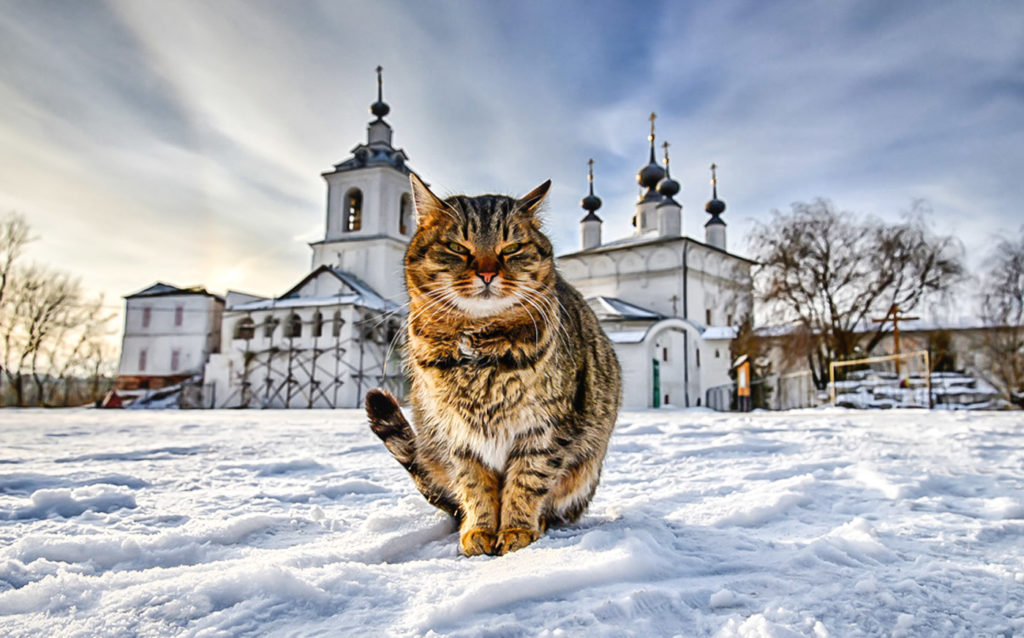 Как кошки на Руси появились?
